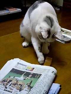 ネコのじゃらし方