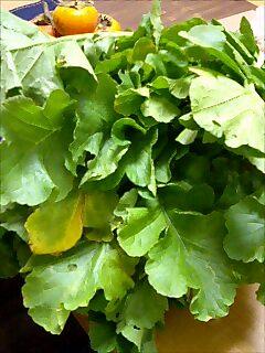 実家の野菜たち
