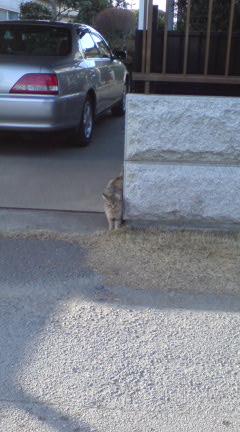 ネコとの遭遇