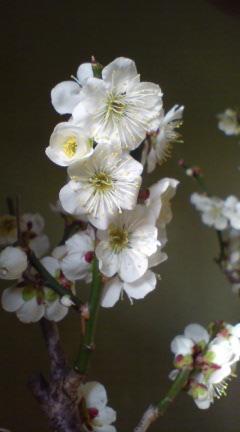 今日の花(外)